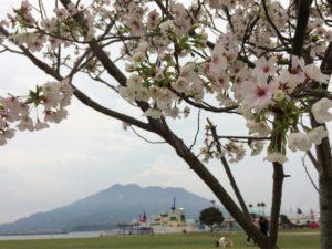 桜島 鹿児島 桜